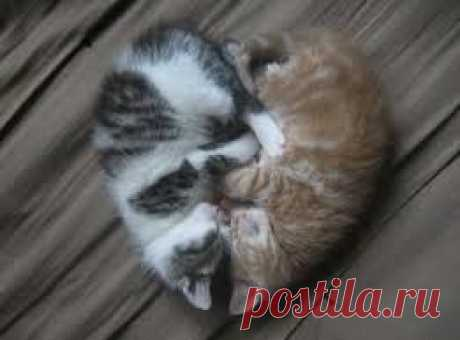 you see; friendship comes first in the world of the kittens; this should be in the haurt of the people to...