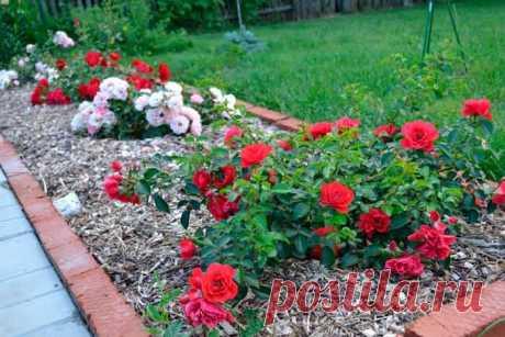 Как оформить розарий на даче (схемы посадки, уход)