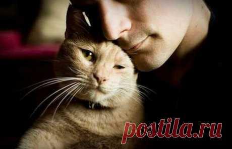 Кошка как показатель вашего благополучия | Ilike.pet | Яндекс Дзен