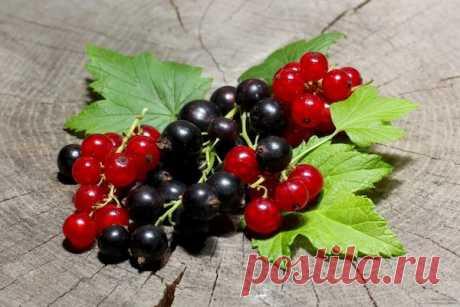 Мои секреты ухода за смородиной  Смородина! Черная, белая, красная... Лично я очень люблю эту ягоду. Вообще, с наступлением сезона сбора урожая я питаюсь исключительно подножным кормом прямо с куста. Там огурчик схрумкаю, там ягодку…