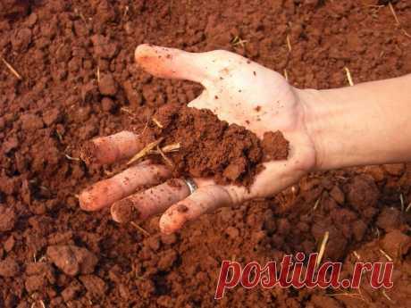 Как узнать тип почвы, и зачем это нужно | Огород без хлопот