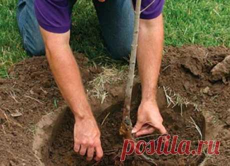 15 faltas más frecuentes a la plantación de las plantas