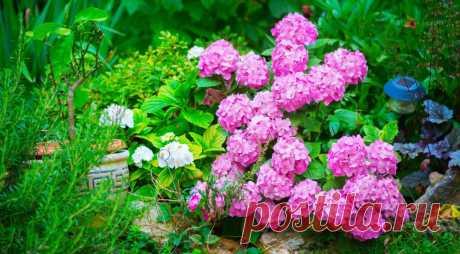 Декоративные кустарники: календарь цветения - Садоводка