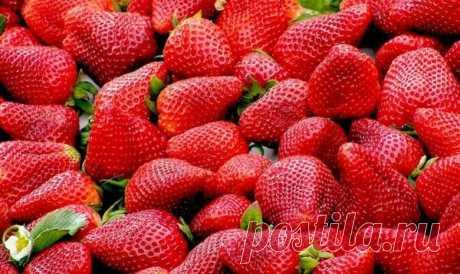Чем подкормить клубнику весной для увеличения урожая. | Блоги о даче, рецептах, рыбалке