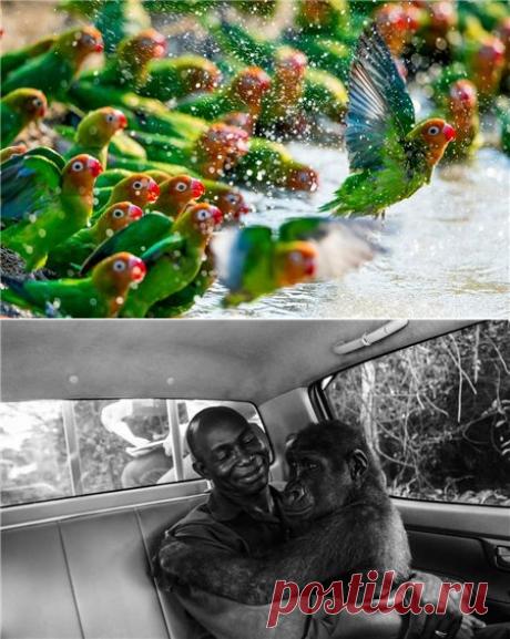 Премия года. Фото дикой природы - Братья наши меньшие - ГОРНИЦА -блоги, форум, новости, общение