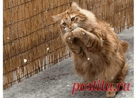 Невероятная история о кошке, которая пришла просить помощи у людей, чтобы спасти своих замерзающих котят...