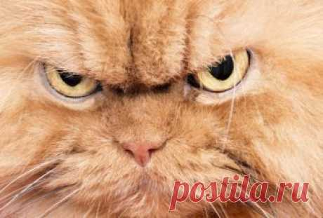 5 знаков Зодиака, спорить с которыми не стоит, когда они не в настроении Есть люди, которых достаточно легко вывести из себя. Для этого достаточно лишь проигнорировать их сообщение или же отвесить грубый комментарий. У каждого человека бывают дни повышенного раздражения, но у некоторых подобные дни случаются особенно часто.