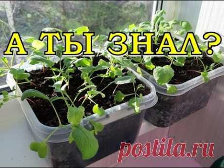 ЭКСПЕРИМЕНТ: выращиваем редис дома...возможно ли это?