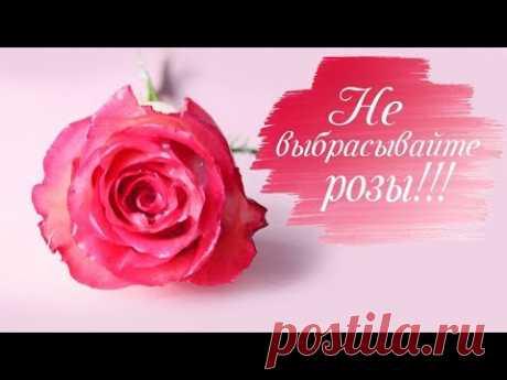 БОЛЬШЕ НЕ НУЖНО ВЫБРАСЫВАТЬ ЦВЕТЫ! Как продлить жизнь цветам. Розы в воске!