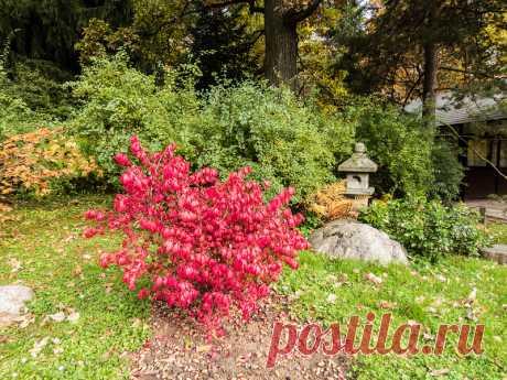 Листья жёлтые в Главном Ботаническом... - 30 Октября 2016 - Персональный сайт