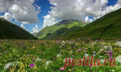 Здравие - блог Захара Журавлева