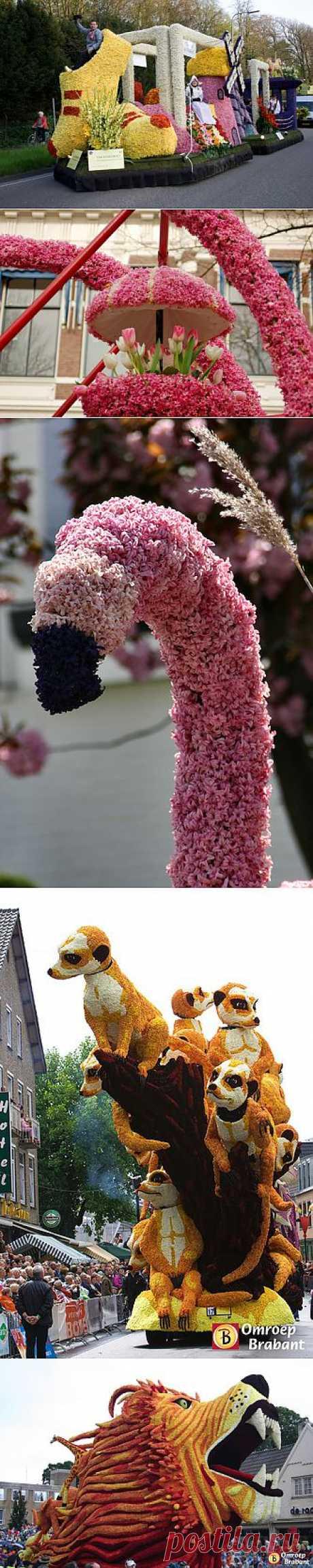 Путешественники.ru - Aalsmeer Flower Parade