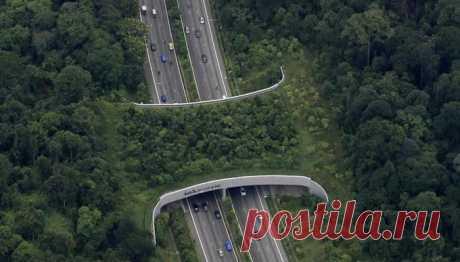 """Актуальный Мир on Twitter: """"В некоторых странах над дорогами построены мосты для безопасного передвижения животных https://t.co/Fx1rwAc1Ew"""" / Twitter"""
