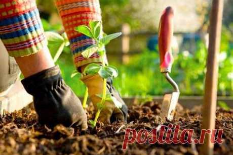 15 способов сделать лёгким уход за садом и огородом
