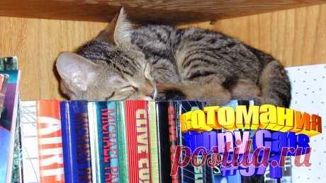 Вам нравится смотреть приколы про кошек? Тогда мы уверены, Вам понравится наше видео 😍. Также на котомании Вас ждут: видео кот,видео кота,видео коте,видео котов,видео кошек,видео кошка,видео кошки,видео о котах, видео приколы, видео с котиками, для кошек, котики смешное, кошка видео, прикол, приколы про, про кошек смешное до слез, ролики про котов, смешное котики, смешные видео с кошками, смешные котики