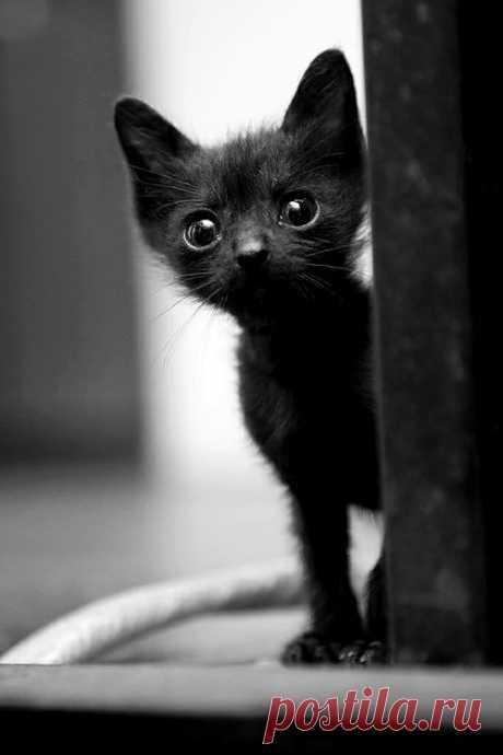 The tiniest kitten.