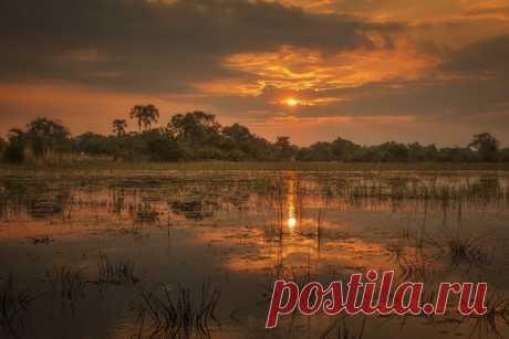 Закат в дельте южноафриканской реки Окаванго, Ботсвана. Фотограф - Олег Домалега: Тёплой ночи.