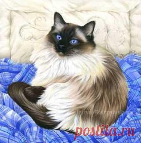Irina Garmashova-Cawton - Artiste Peintre Animalier - Spécialiste des Peintures et Portraits Félins - Couleurs - Chat Siamois Angora sur un lit