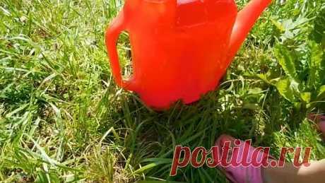 Супер способ увеличить урожай огурцов