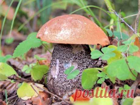Топ моих красивых фотографий грибов | Пора путешествий | Яндекс Дзен