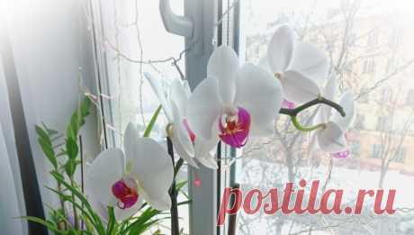 Чем подкормить орхидею в домашних условиях – выбор лучшего средства