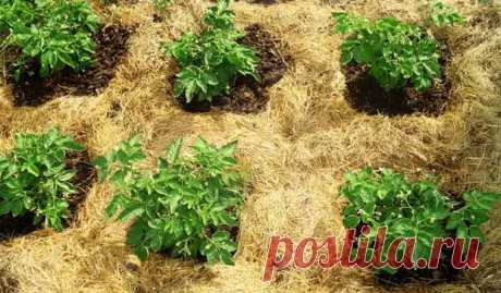 Как сделать почву плодородной — простые советы! - Наша дача - медиаплатформа МирТесен