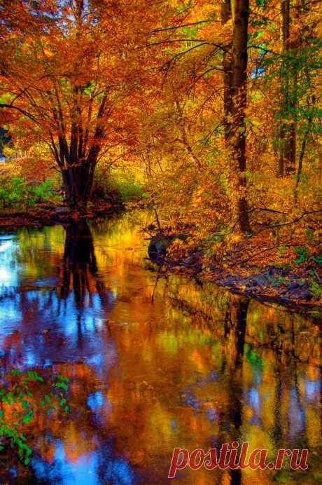 «Осенний лес – это удивительное зрелище! Все вокруг наталкивает на мысли, что природа – это художник, в распоряжении которого остались лишь краски двух цветов – желтого и красного.» — карточка пользователя К в Яндекс.Коллекциях