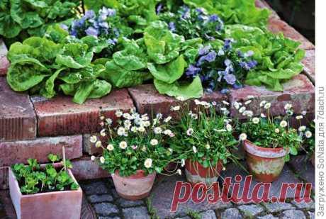 Как оригинально обновить сад | 6 соток
