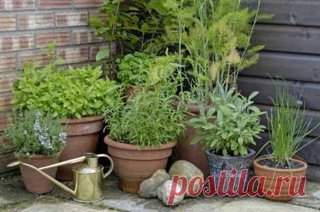 Садик пряных трав: ароматное украшение дачного участка | Наш уютный дом