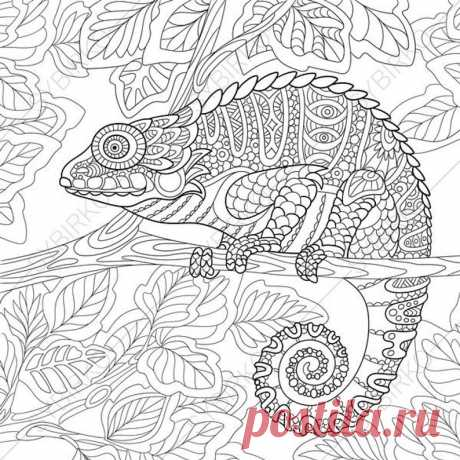 Chameleon Lizard. 2 Coloring Pages. Animal coloring book pages | Etsy
