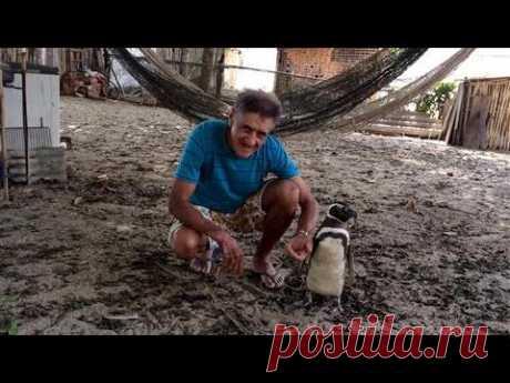 Дружба пингвина и человека