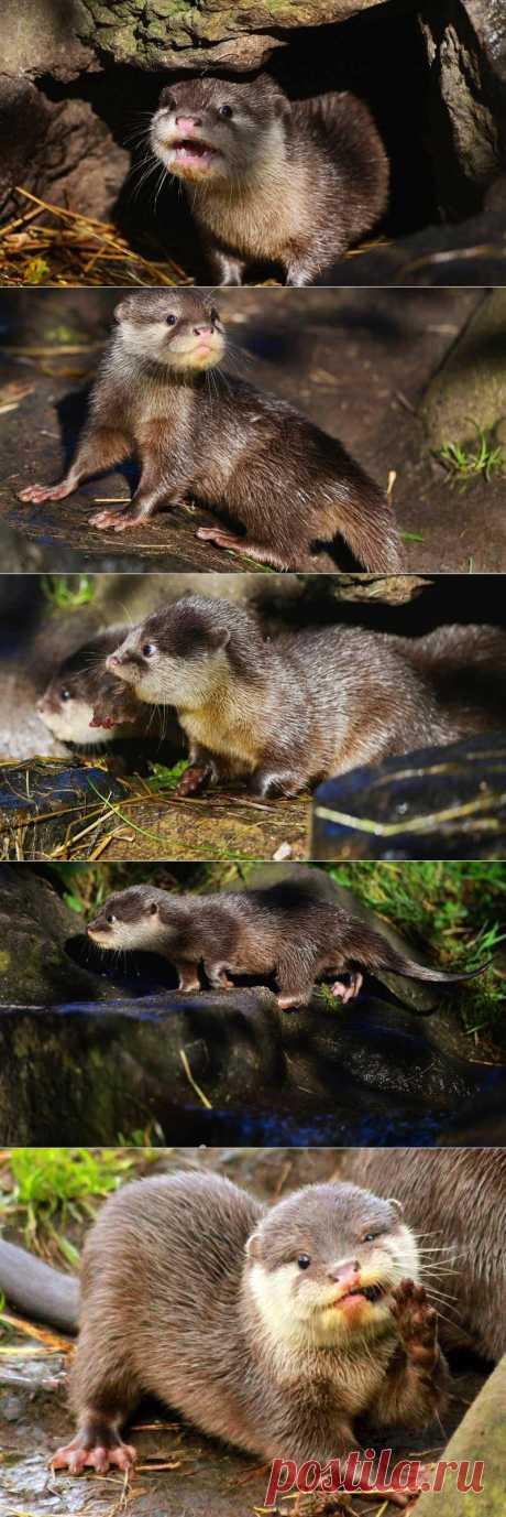 Интересно и красиво, животные, природа и много фото - Выдрята из Эдинбурга. ФОТО