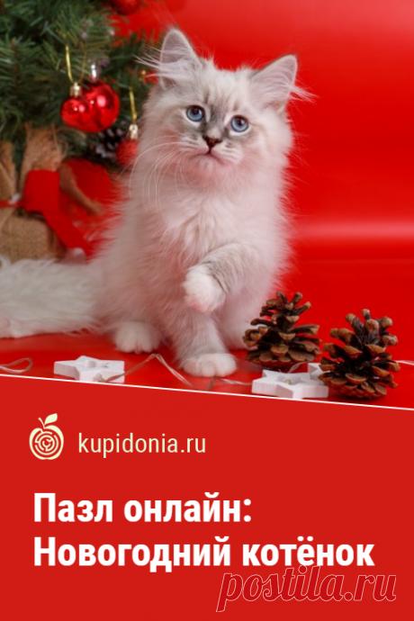 Пазл онлайн: Новогодний котёнок. Красивый новогодний пазл, который поднимет ваше настроение. Собери пазл на сайте!