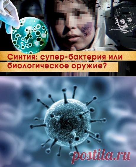"""Выведенная американцами бактерия """"Синтия"""" могла быть прародительницей COVID19 - Последние новости - медиаплатформа МирТесен"""