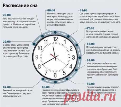Как использовать расписание сна и биоритмы для поддержания здоровья