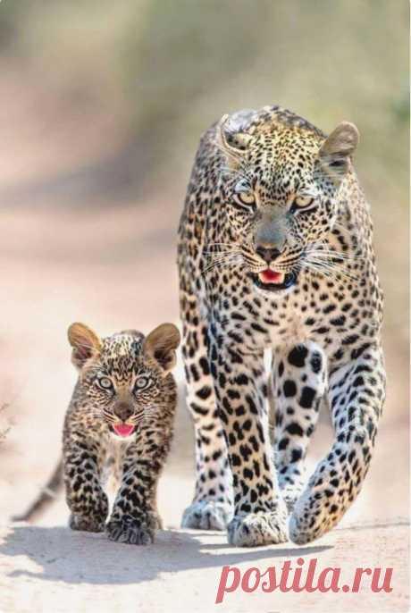 Детеныши животных очаровательны, и даже очень