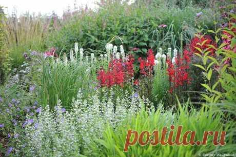 5 растений, которые не спешат разрастаться