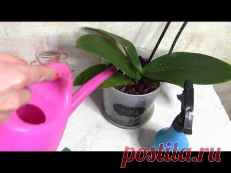 ¡Está enferma la orquídea, no florece, hay una salida - el agua de ajo!