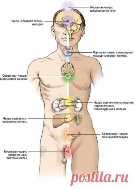 Связь семи чакр с органами физического тела .