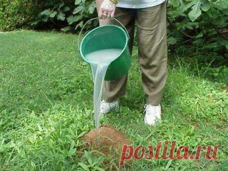 Как моя бабушка изводила муравьев в огороде. Простое, копеечное средство и никакой химии. И грунт в порядке и дачник доволен | ДАЧНИК СТРОИТЕЛЬ | Яндекс Дзен