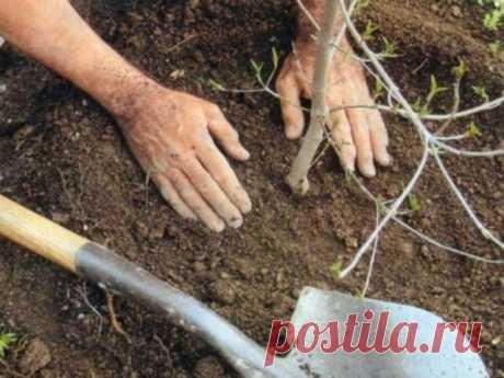 Чем лучше подкармливать плодовые деревья и кустарники осенью, хорошая подкормка