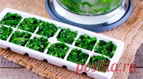 Как хранить салат листовой: можно ли заморозить салат листовой на зиму в морозилке?
