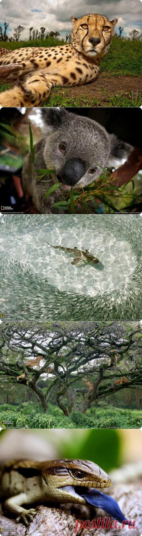 Фото National Geographic за июль 2011 из раздела Природа в интернет журнале zabort.ru