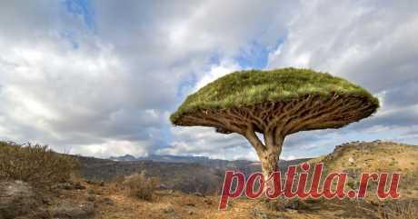 Топ-10 старинных деревьев со своей историей, которые переживут нас всех - Большой рейтинг Деревья – одни из самых долгоживущих представителей зеленого мира Земли. Многие из них пережили разные исторические эпохи, и были свидетелями