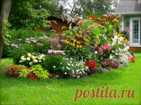 Каталог Цветов для Дачи (240+ Фото с Названиями ) - ModernPlace.ru