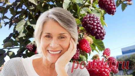 Необычную ягоду назвали мощным средством для долголетия на каждый день