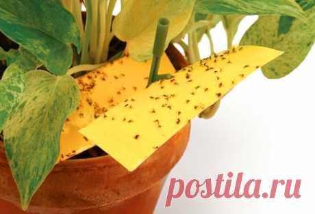 Как избавить комнатные растения от мошек — Полезные советы