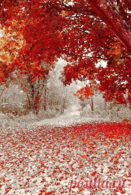 Дыхание зимы, обжигает.