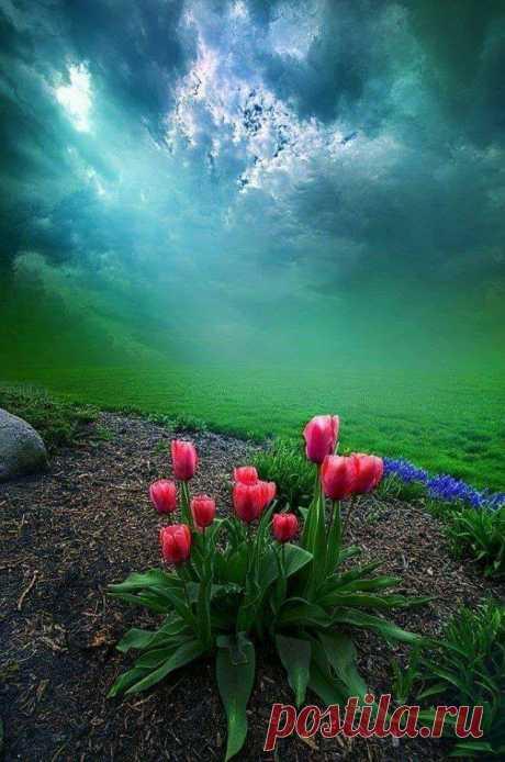 Краски природы... Перед грозой....Прекрасный пейзаж!.Цветы- отзвуки РАЯ!... Перед грозой....Цветы- отзвуки РАЯ!...Прекрасный пейзаж! Красота неописуемая... Глаза поили душу красотой.,всё что создано природой очень красиво Пока ты дышишь — ты всего лишь дышишь. А вот пока ты любишь — ты живёшь. ...