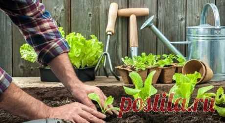 Почва для рассады - Клуб Органического Земледелия